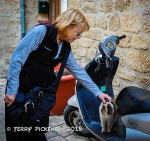 Cats of Sarlat