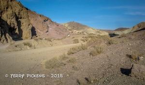 Calico 11-30-2008-2