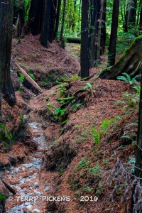 Small dry creek