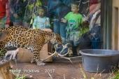 Zoo-22