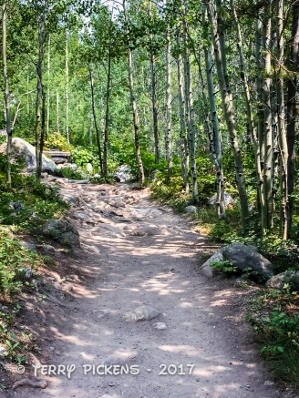 Trail to Taggart Lake