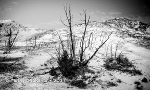 Yellowstone Day 4a-2