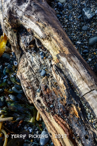 Flotsam on the beach at Battery Point Lighthouse, Crescent City, CA