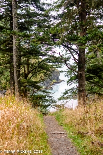 On the walk to Cape Disappointment Lighthouse