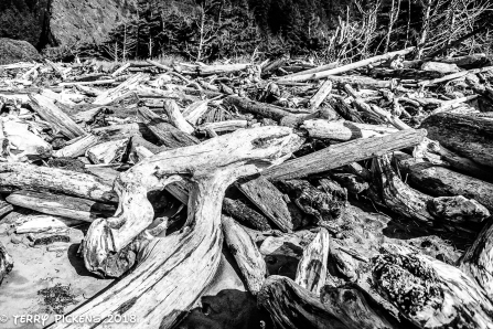 Storm tossed logs at Cape Disappointment Campground Beach