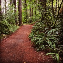 Lacamas Park trails