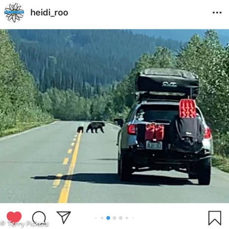 Watch out for the bears along the highway.