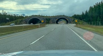 Animal overpass along the Icefields Parkway